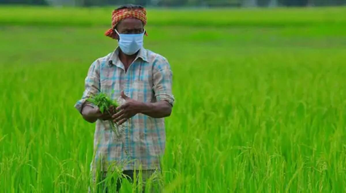 Farm exports defy overall trend in 2020, see 9.8 per cent growth