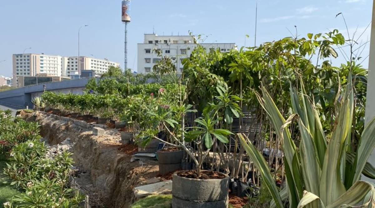 Hyderabad recognised as a 'Tree City of the World'
