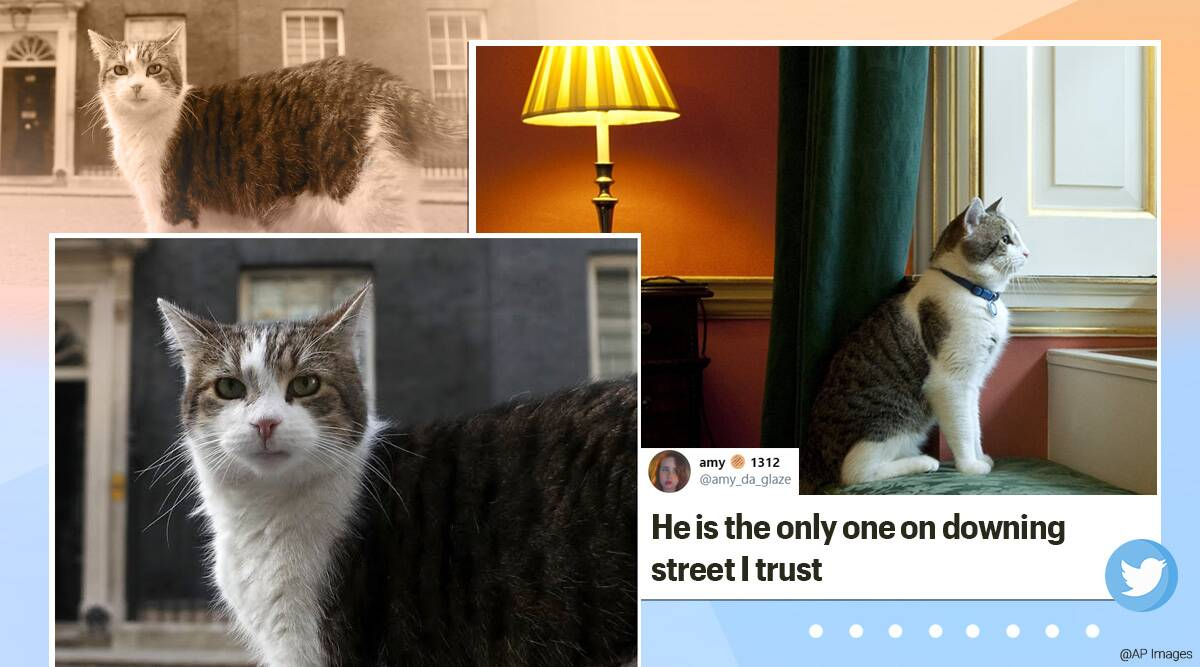 Larry the Cat, 10 downing street, 10 year anniversary, a decade of Larry the cat, 10 downing street cat, Larry at 10 downing street, 10 years of Larry the cat, UK cat, UK 10 downing street cat, larry cat 10 downing street, UK larry cat, trending news, Indian express news
