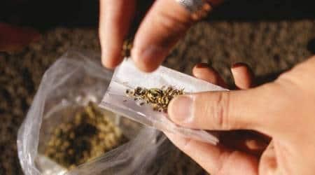 Mumbai: 1,800 kg marijuana seized from tempo on e-way near Vikhroli, two arrested