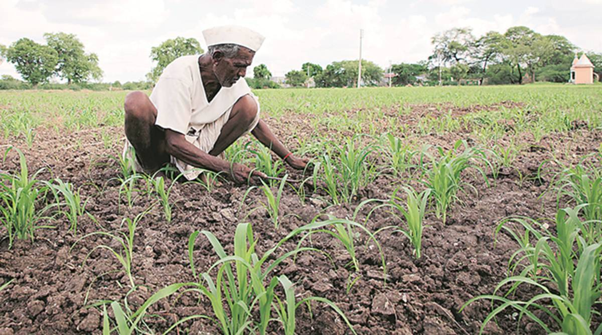 Mumbai: Agri minister moots proposal of zero interest for farmer crop loan up to Rs 3 lakh