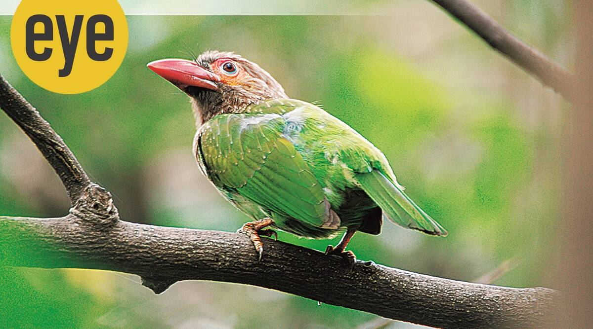 spring, speing season and animals, ranjit lal column, ranjit lal, eye 2021, indianexpress,