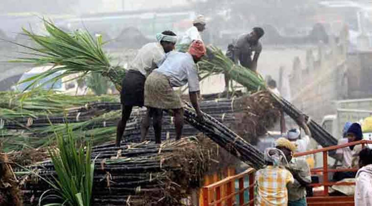 Sugarcane SAP, UP Sugarcane farmers, Lucknow news, Up news, Indian express news