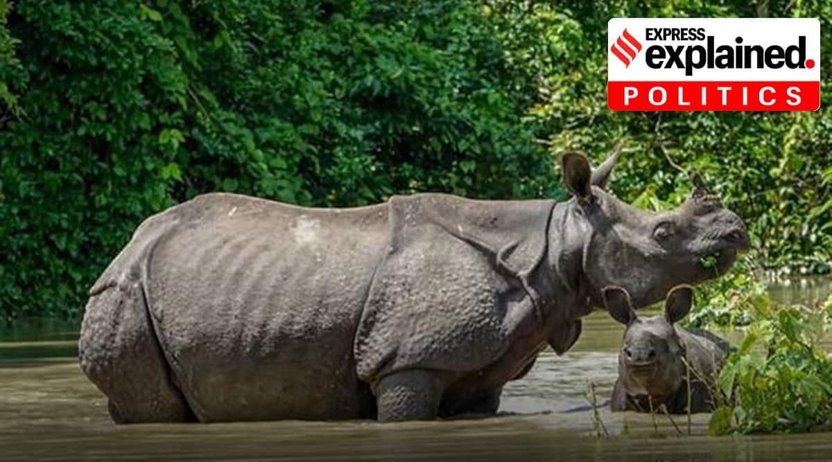 Assam, Assam rhinos, Assam elections, Indian Express