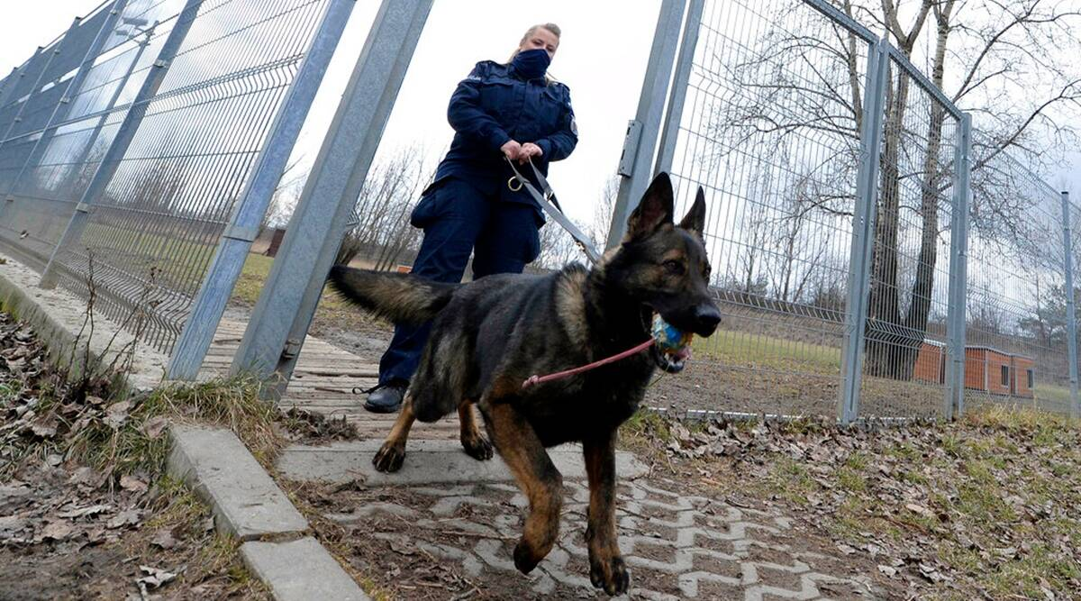 Poland, Poland dogs pension, Poland horse pension, Dogs in services at Poland, Poland news, world news, schemes for dogs in Poland, indian express