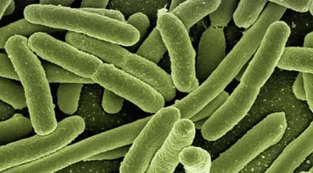 Urinary tract infection, UTI, symptoms of UTI, home remedies to treat UTI,