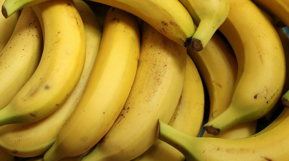 bananas benefits, banana relation digestion, how to aid digestion, best food for digestion, benefits of bananas, health, gut health, indian express news