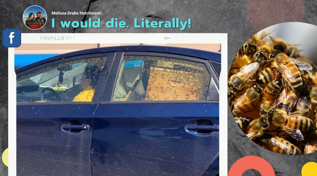 woman driving with bees, car filled with bees, Alabama woman driving with bees, viral news, odd news, indian express