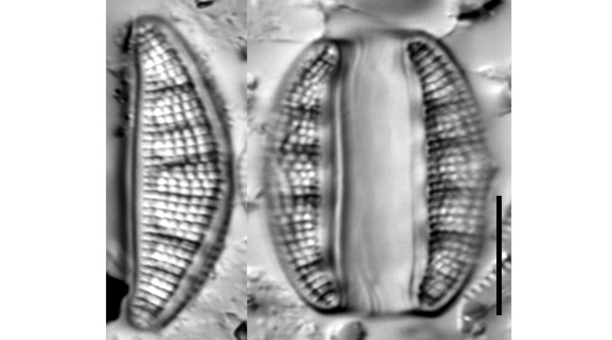 New species of diatoms discovered in Mula river