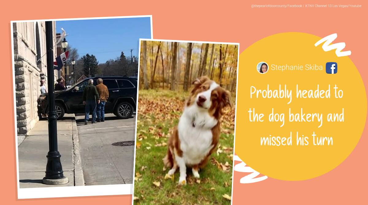 dog car carsh, dog crashes owners car, dog blamed for car crash, dog hit Wisconsin building, odd news, indian express