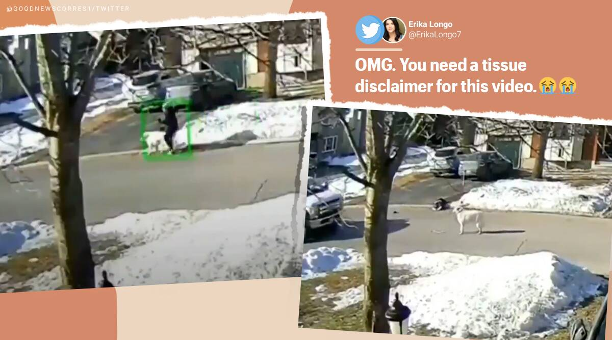 dog, dog saves woman, Haley Moore, Ottawa, Canada, Dog stops traffic in Canada save owner seizure, seizure, viral video, twitter reactions, indian express, indian express news