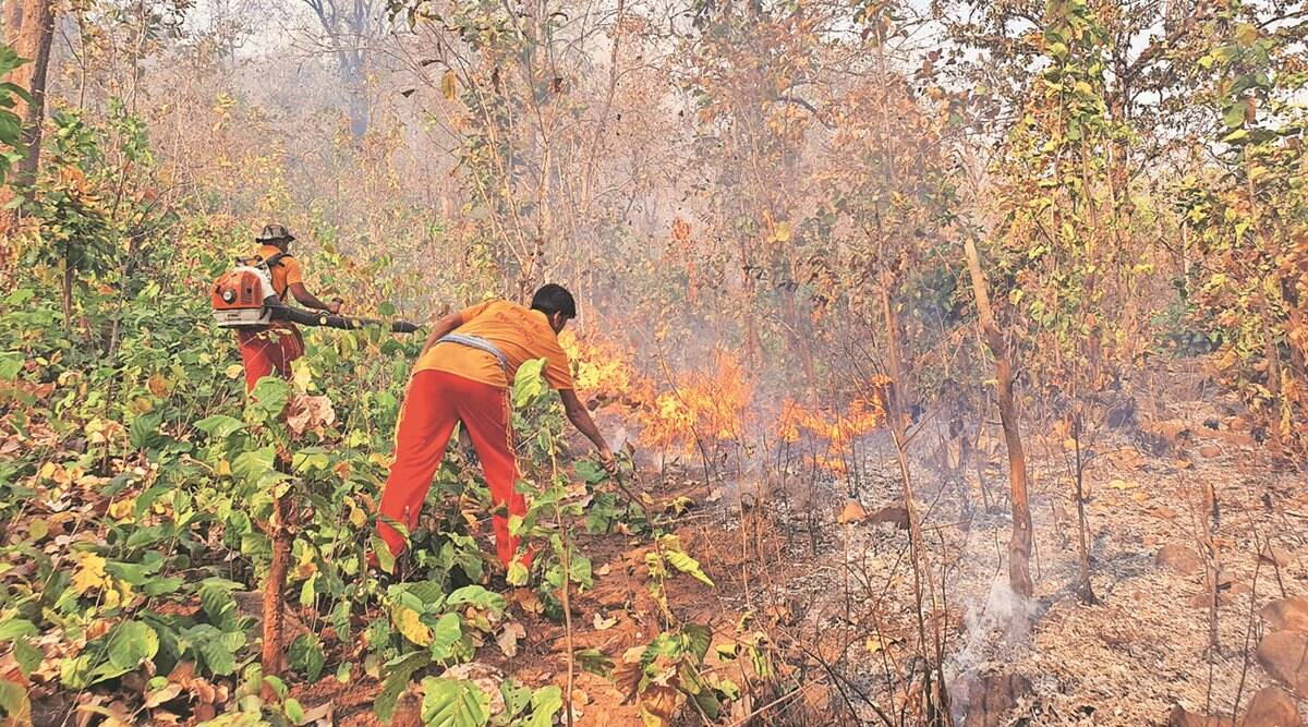 Early summer, lack of rain spark fires at reserve, Odisha on edge