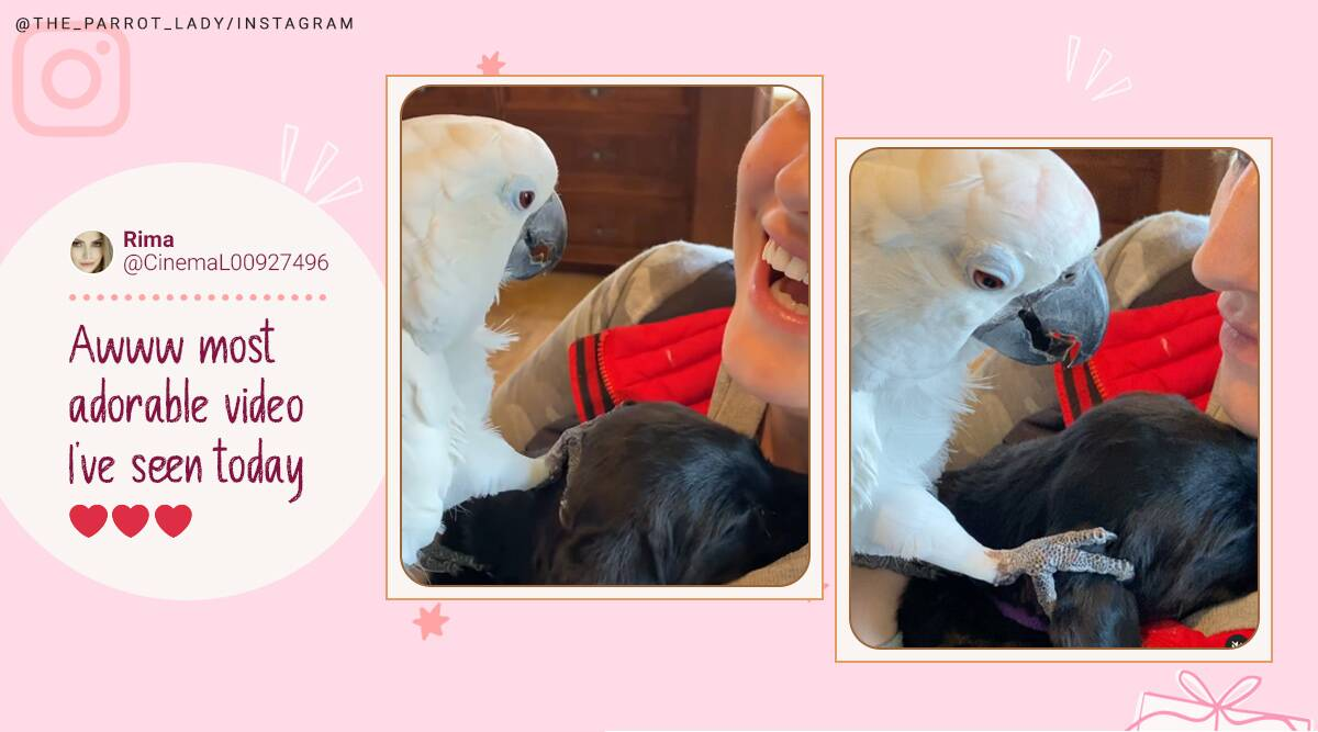 parrot meets puppy, pets meet new pets, parrots tells puppy love you, the parrot lady, cute animal videos, indian express