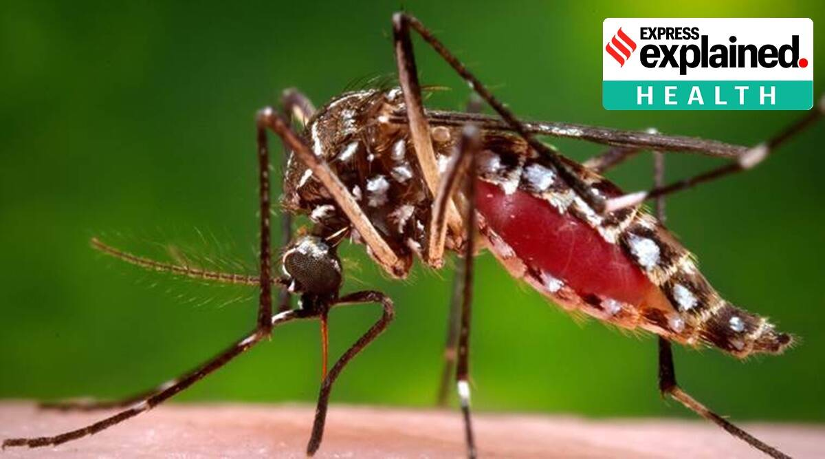 mosquito protein, mosquito virus, Covid virus, Coronavirus cases, Indian express news