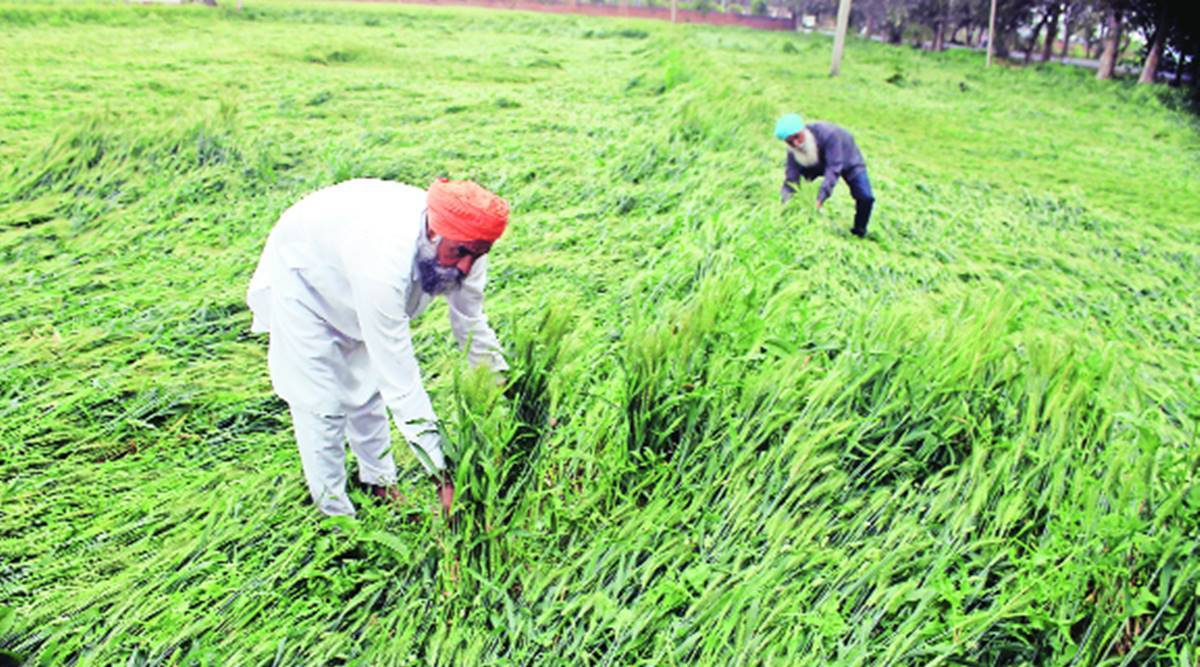Farmers, farm labourers