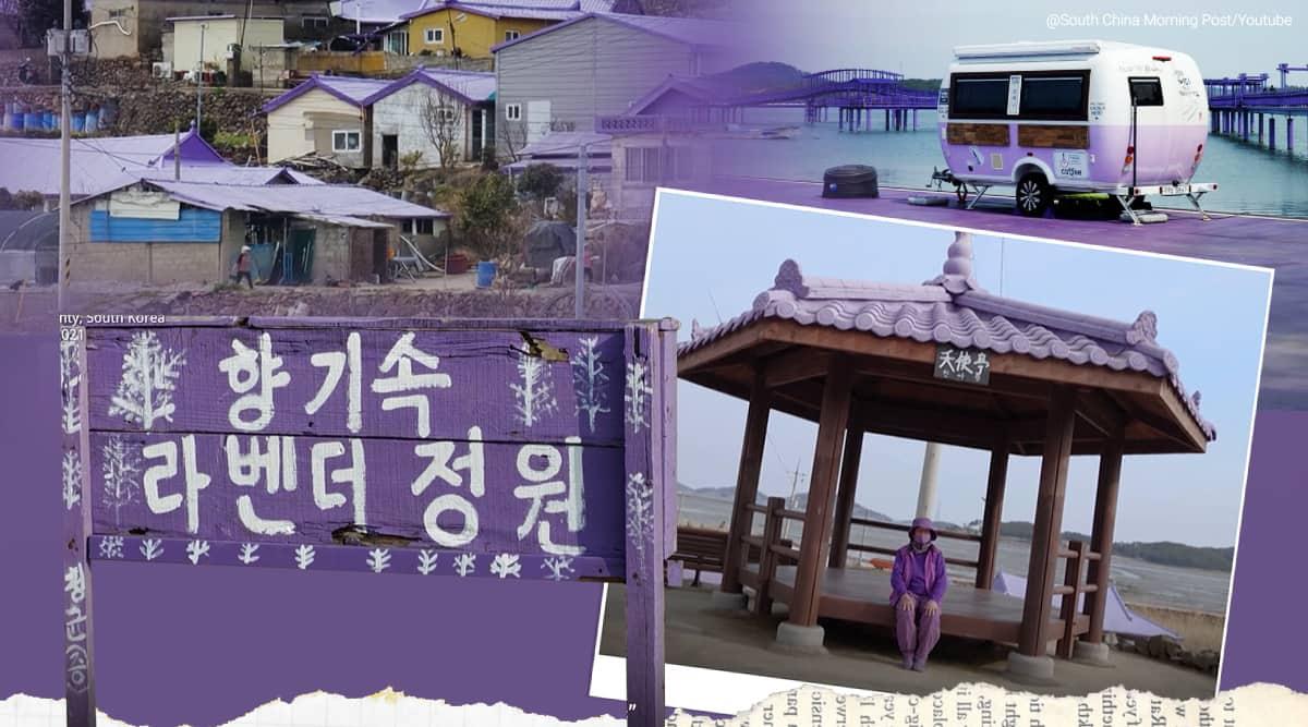 "South Korea's ""Purple Islands"", purple islands, china, china post, twitter reactions, purple, purple colours, south Korean islands in lavender colour, south Korea tourism, trending, indian express news"