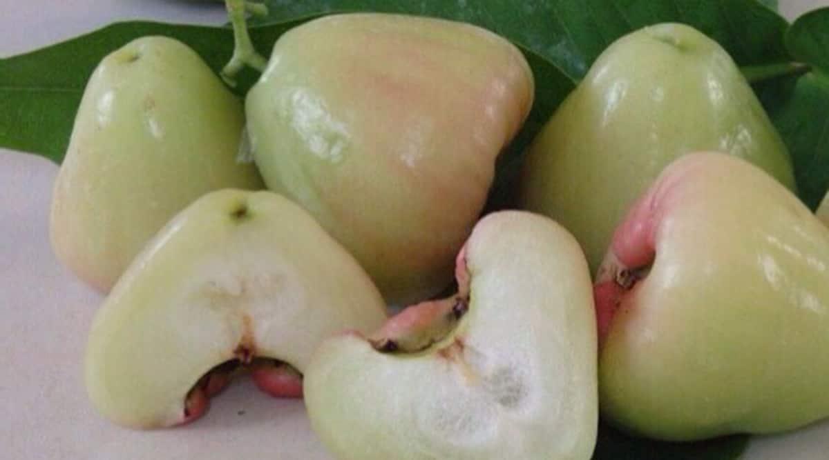 white jamun fruit, seasonal fruits, wax jambu, wax jambu benefits, white jamun benefits, fruits, seasonal fruits, indianexpress.com, indianexpress,