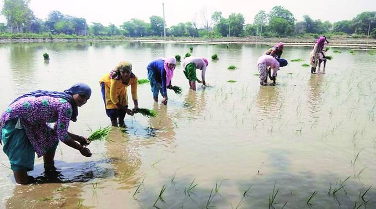 Suicide rate among women farm labourers 1.5 times higher than women farmers: Study