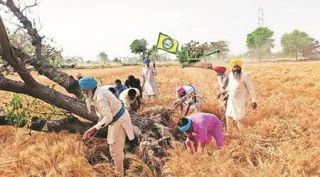 Punjab farmers, MSP, mandi, Sukhminder Singh, tikri border, farmers protest, Punjab Kisan Mazdoor Sangharsh Committee, Punjab news, indian express