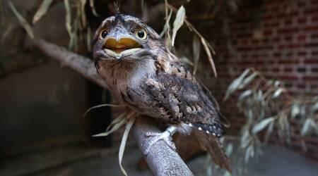 Birds Arts, Culture And Entertainment United States, Southeast Asia University Of Konstanz Baltimore (Md), Brookfield Zoo Photography, Animal Behavior, Horizontal Terms Research, Australia Bobcats, Animals, Science And Technology ,Instagram Inc Audubon Society