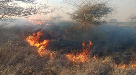 Gujarat forest fires