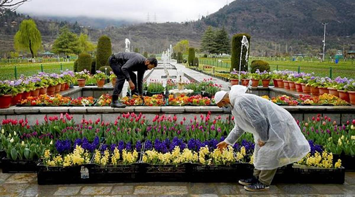 Tulip Garden, Tulip Garden reopening, Tulip Garden six-day festival, indian express news