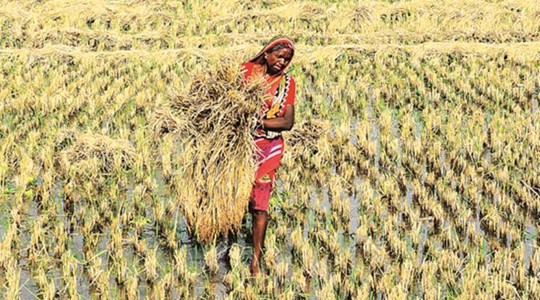 Summer crop sowing in Gujarat rise by 127 per cent