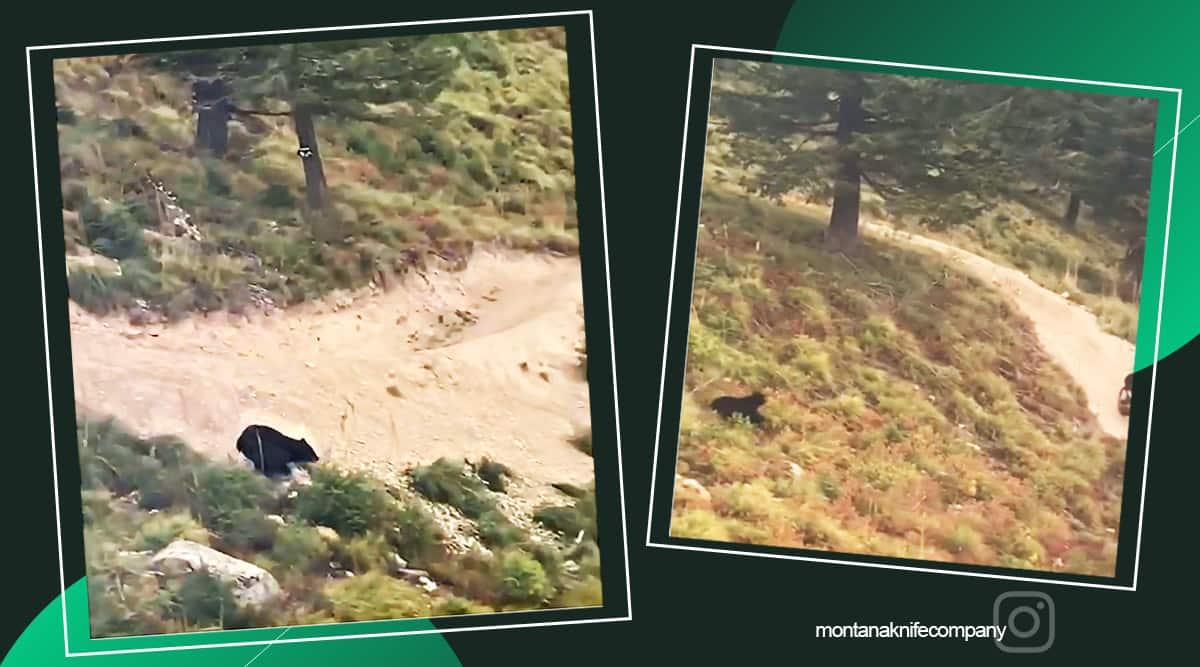 Bear chases biker, Montana, Black bear videos, Black bear chasing biker's viral videos, Viral video, trending news, Indian Express news
