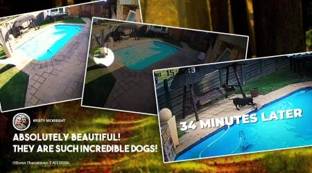 Dog rescue dog, swimming pool, South Africa, Dog rescue videos, Dog helps another dog, viral video, Trending news, Indian Express news.