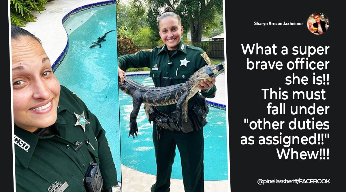 alligator rescue, Florida, Aligator in swimming pool, alligator rescued from swimming pool, woman police officer rescue alligator, Tampa bay, trending news, Idanin Express news