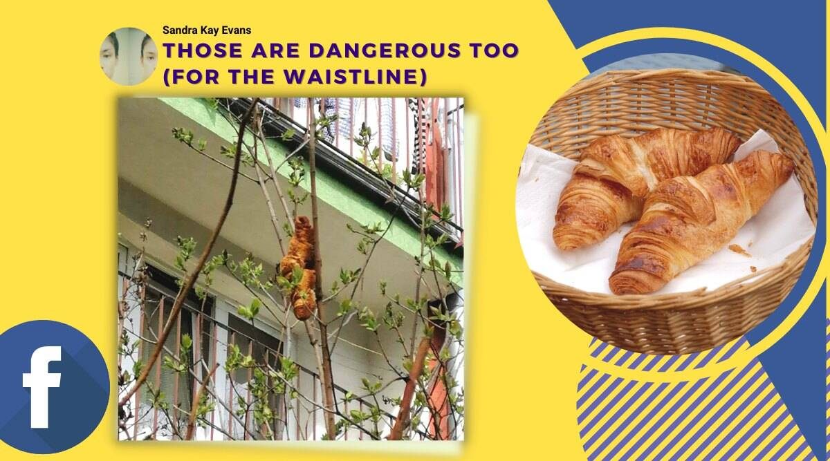 croissant on tree, mysterious creature turns out to be croissant, poland lagun on tree, polant beast on tree croissant, funny news, odd news, indian express