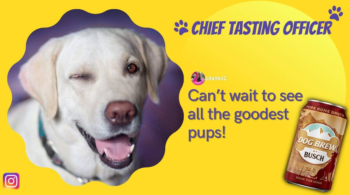 dog tasting officer, busch beer, busch dog brew, dog high paying job, dog chief tasting officer, busch canine tasting officer, odd news, indian express