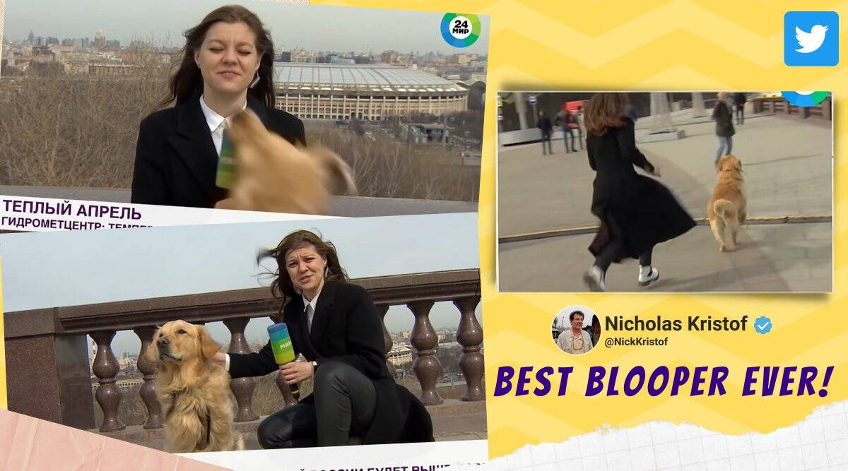 dog runs away with reporter mic, russia mir tv dog run away with mic, mir 24 dog run away with mic, dog blooper live tv, live tv bloopers, viral videos, indian express