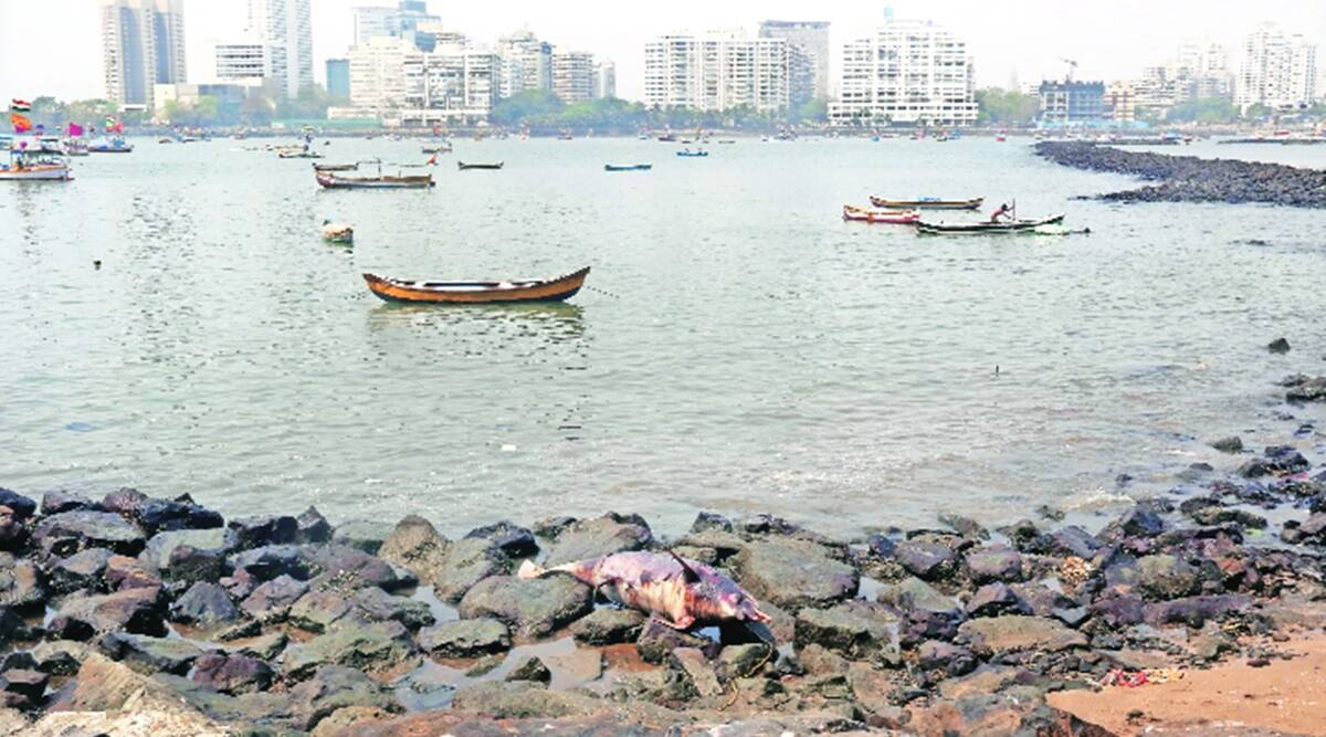 Seven-ft carcass of dolphin washes ashore at beach in Mumbai