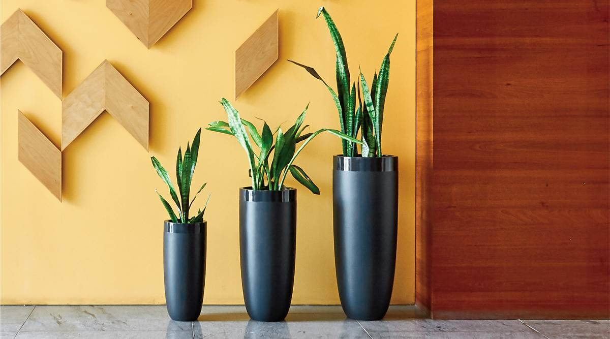 home decor, decorating indoor space, indoor flower pots, decorative flower pots, indoor and outdoor plants, indian express news