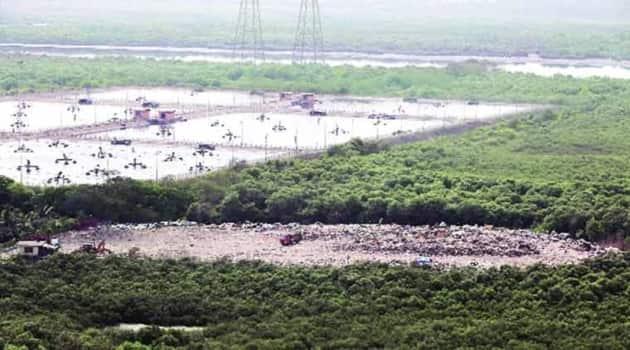 Mumbai's mangroves, Mumbai's mangroves artworks, world earth day, world earth day 2021, indianexpress.com, indianexpress,