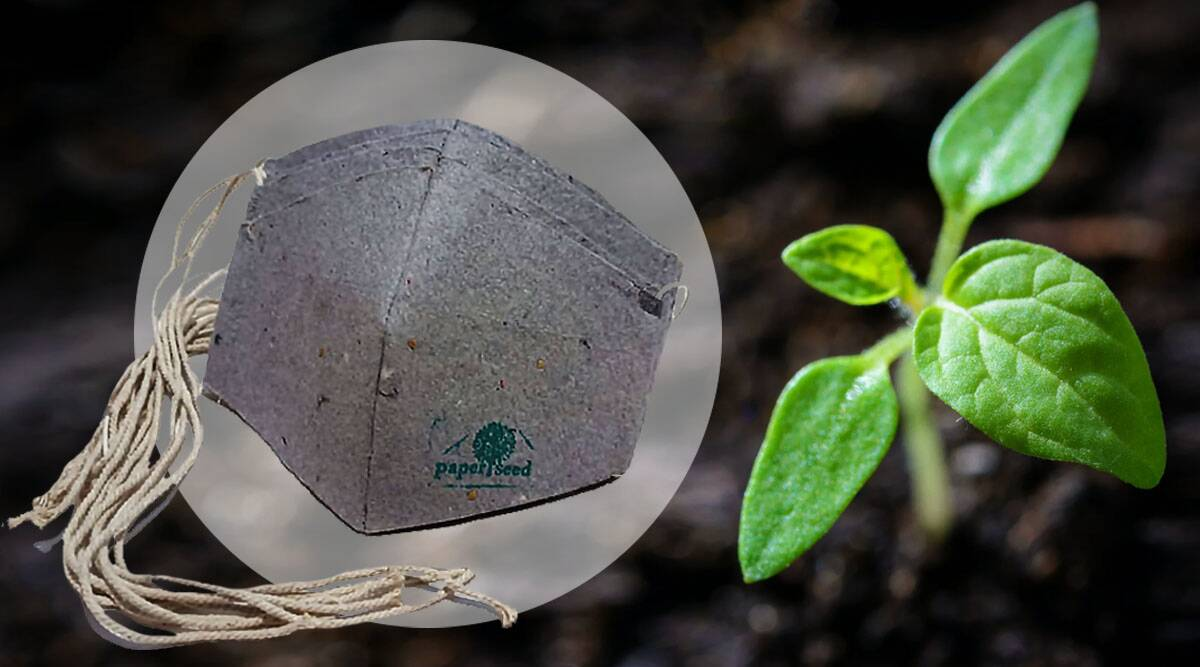 eco friendly masks, plant seed masks, various facemasks, facemask pollution, covid 19 pandemic, paper seed company, mangalore plant seed masks, good news, health news, indian express