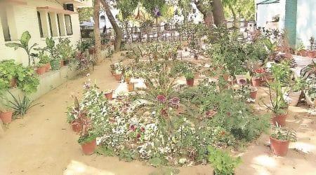 delhi news, butterfly garden, butterfly garden in Delhi, butterflies in delhi, india news, indian express
