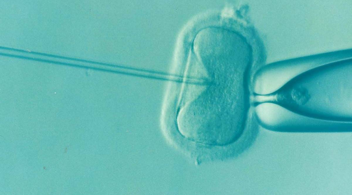 embryo transfer, IVF treatment, when is embryo transfer done, everything to know about embryo transfer, embryo transfer and pregnancy chances, health, parenting, indian express news