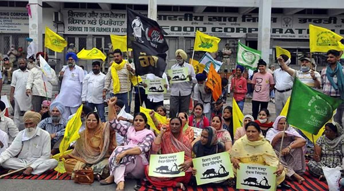 Haryana arhtiyas go on strike against DBT, govt claims limited impact