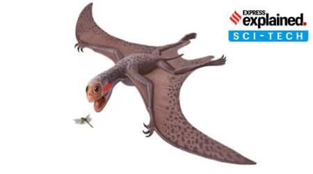Pterosaur, Explained Sci-Tech