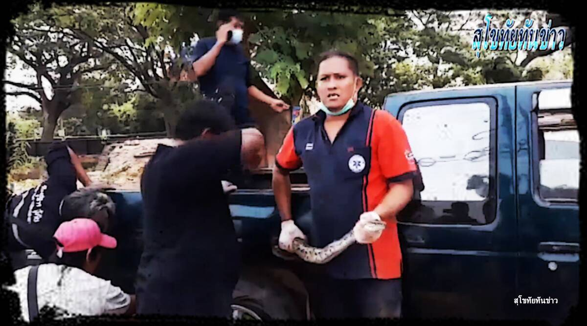 snake in car, snake in fuel tank, python in fuel tank rescue, snake inside car engine, snake rescue video, indian express news, odd news,