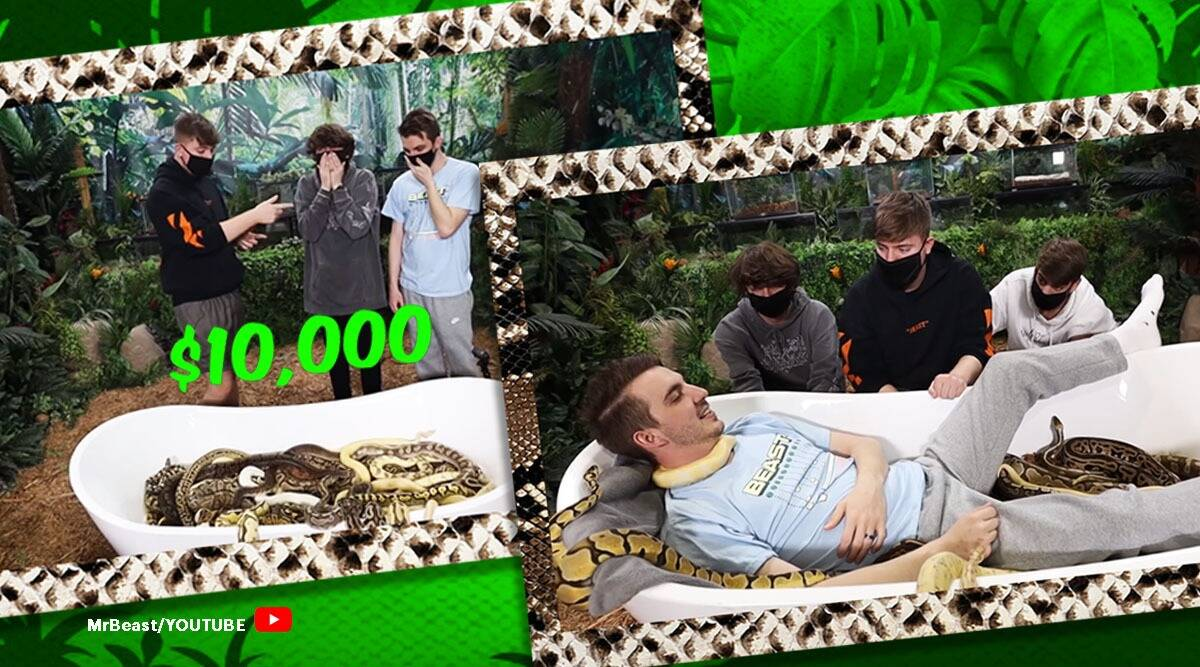 snake, snake show, Would You Sit In Snakes For $10,000, YouTuber MrBeast, snake viral video, youtube, youtube reactions, trending, indian express, indian express news