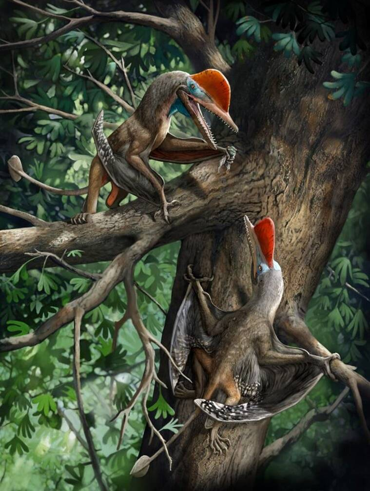Monkeydactyl, reptile with oldest opposable thumbs, what is a Monkeydactyl, Kunpengopterus antipollicatus discovery, express explained, indian express