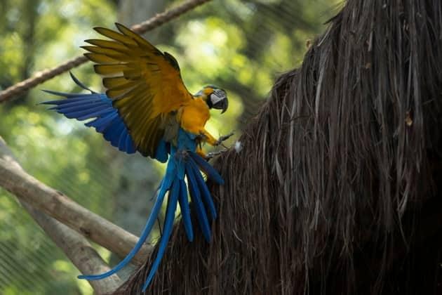 Rio de Janerio, Juliet, Blue and Yellow Macaw, Birds, Zoo, Environment