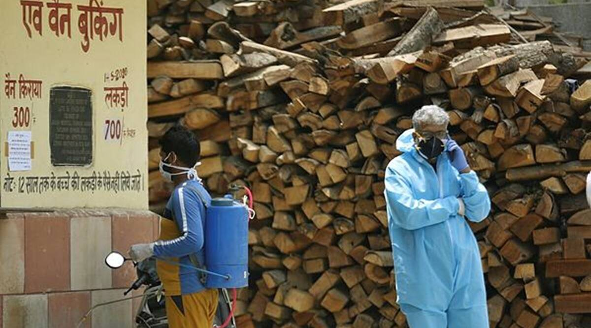 Punjab orders chopping of dead trees to collect wood for Covid cremations
