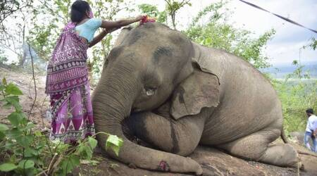 Lightning kills 18 elephants in Assam's Kondoli Proposed Reserve Forest