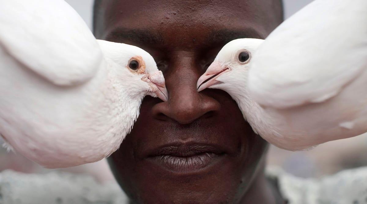 cuba pandemic, cuba pigeon breeding, cuba coronavirus, cuba covid cases, cuba lockdown, cuba pigeons