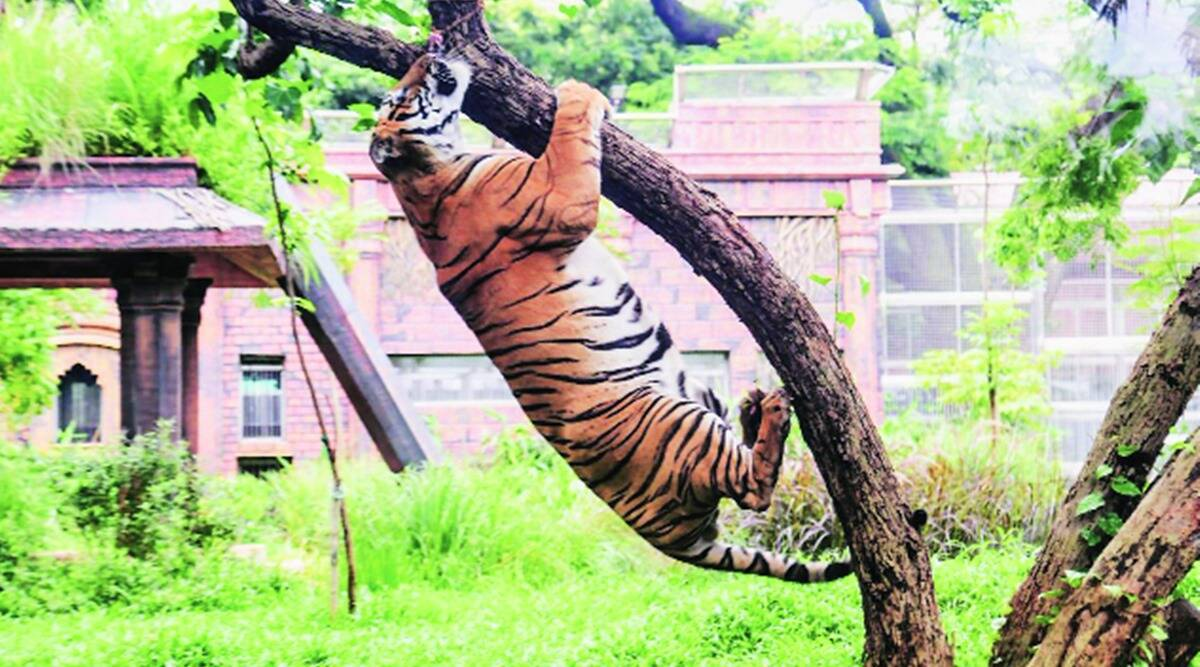 After 11 months, the Byculla zoo had re-opened for visitors in February this year. It was again shut in April after Covid-19 cases started rising.