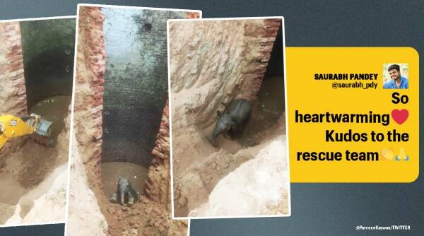 Elephant calf rescued from 30 feet deep well, Jharkhand, Elephant calf rescue video, Elephant videos, Jharkhand elephant rescue, Viral video, Indian express news, Trending news